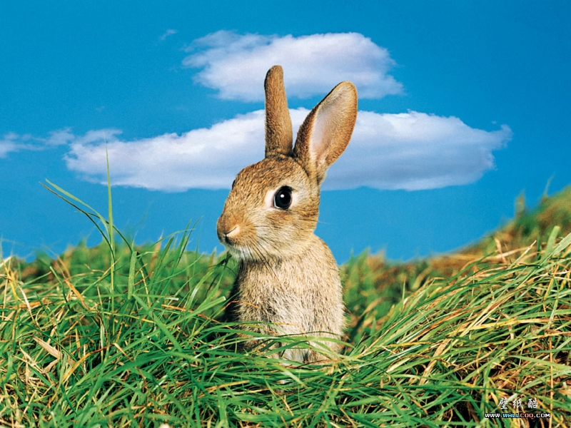 Hop To It! Easter Weekend Open Houses